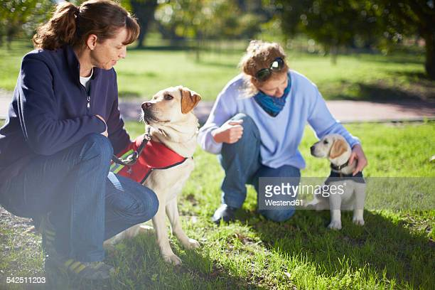 two guide dogs at dog training - guide dog stock photos and pictures