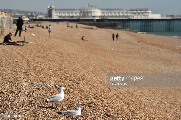 Two gulls join people on a neardeserted beach in Brighton on the south coast of England on April 5 as the warm weather tests the nationwide lockdown...