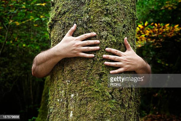 Adoptant un arbre