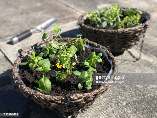 two hanging baskets with herbs - herb stock pictures, royalty-free photos & images