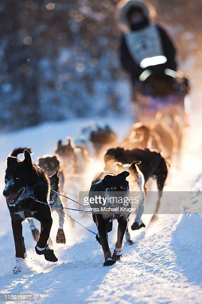 two harbors - dog sledding stock photos and pictures