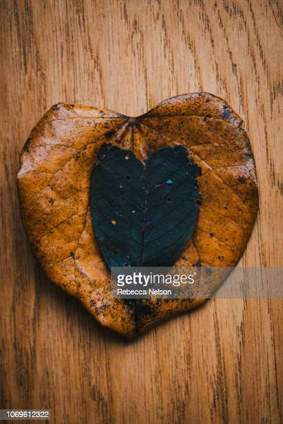 Two heart shaped leaves on wood