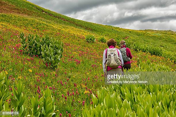 two hikers in wildflower field - カリフォルニアバイケイソウ ストックフォトと画像