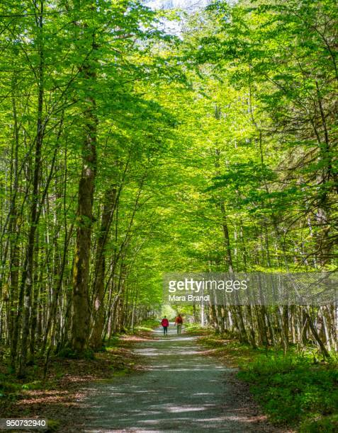 Two hikers on path through deciduous forest, St. Bartholomae am Koenigssee, Berchtesgaden National Park, Berchtesgaden District, Upper Bavaria, Bavaria, Germany