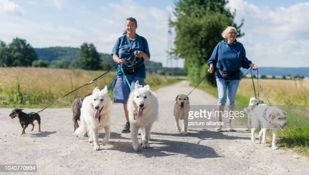 Two hikers walking several dogs of different types near Barsinghausen Germany 12 July 2016 PHOTO SEBASTIAN GOLLNOW/dpa   usage worldwide