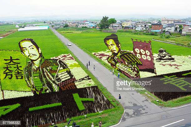 Two histrorical characters are displayed on a rice paddy on July 17 2016 in Inakadate Akita Japan