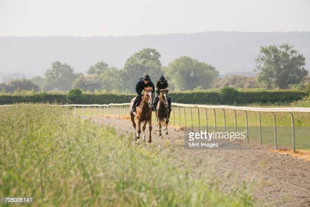 two horses and riders on a gallops path, racing against each other in a training exercise. racehorse training.  - comportamento animal - fotografias e filmes do acervo