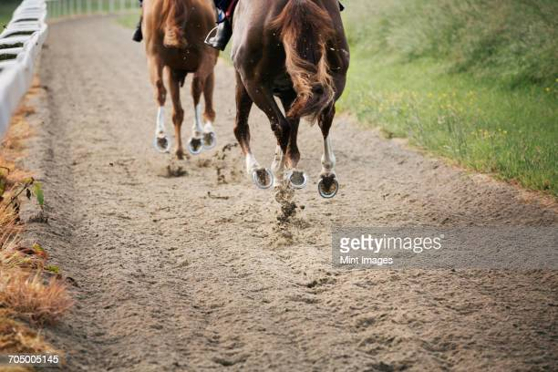 two horses and riders on a gallops path, racing against each other in a training exercise. racehorse training.  - racehorse stock pictures, royalty-free photos & images