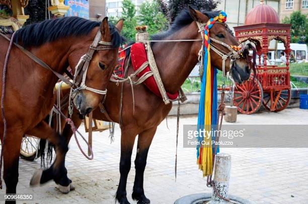 Two horses at Kashgar city, Xinjiang Province, China