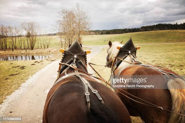 two horses carrying a carriage - pferdeantrieb stock-fotos und bilder