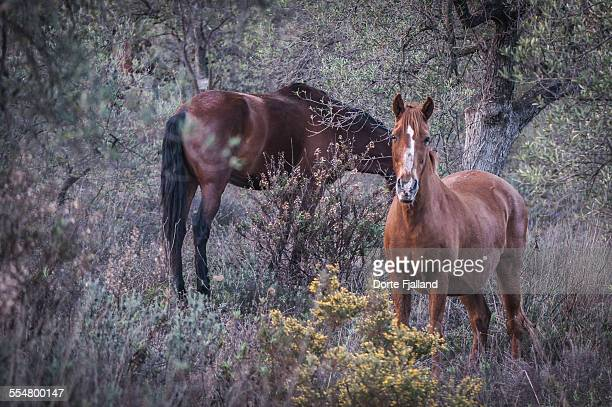 two horses grassing - dorte fjalland stock pictures, royalty-free photos & images