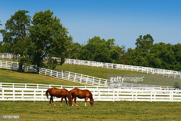 two horses grazing - kentucky stock pictures, royalty-free photos & images