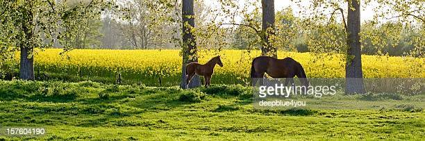 two horses in a green field with trees