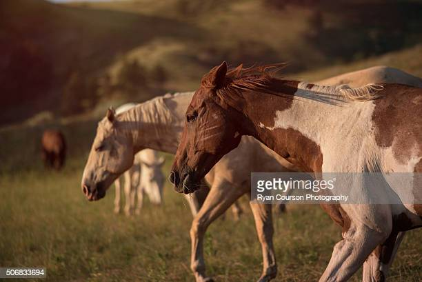 Two horses in mountain pass