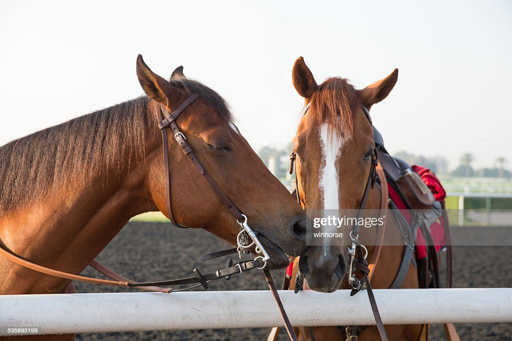 Two Horses Kissing : Stock Photo