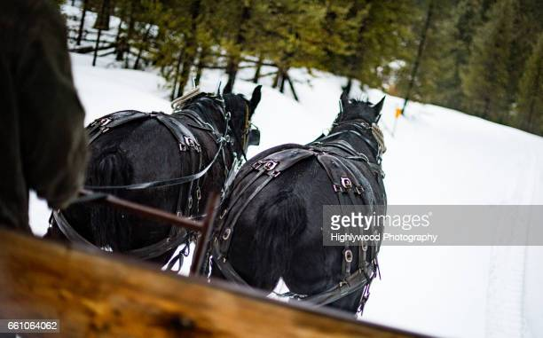 Two Horses Lead the Way