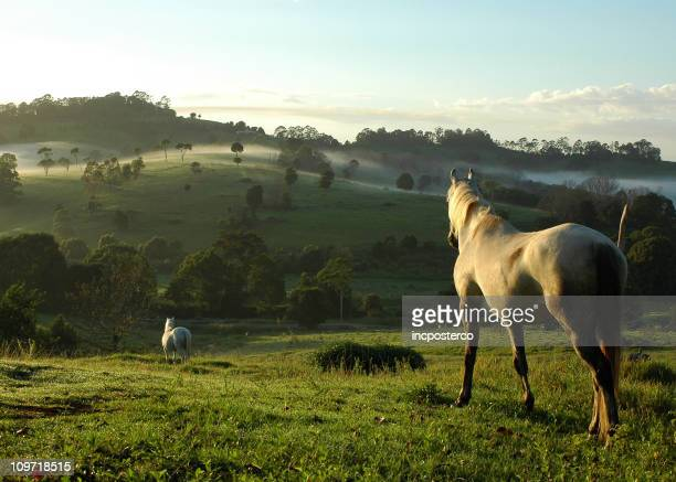 two horses mist - paard paardachtigen stockfoto's en -beelden