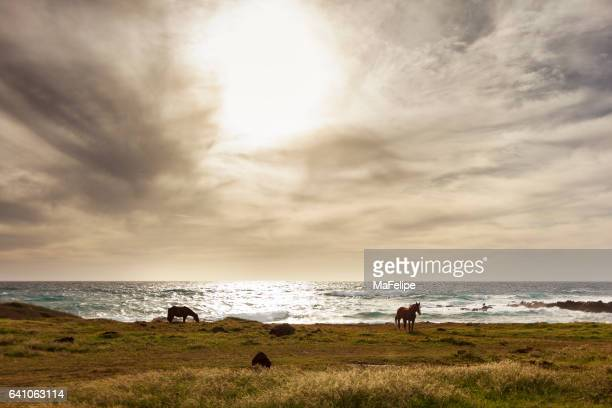 Two horses on a green meadow by the sea