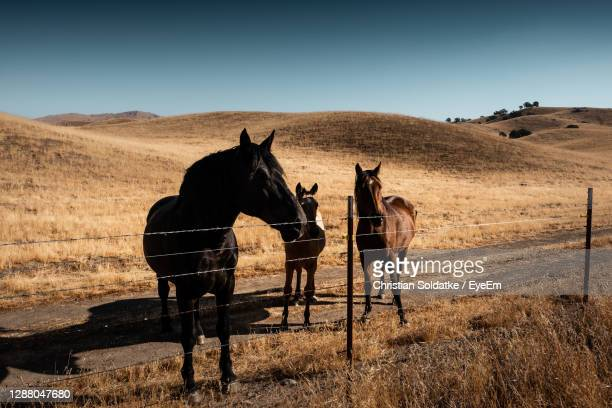 two horses on land - christian soldatke stock pictures, royalty-free photos & images