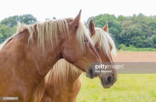 two horses - i love you frase em inglês - fotografias e filmes do acervo