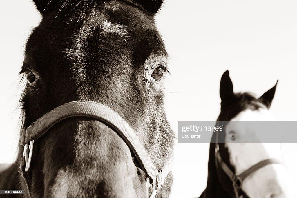 Two horses : Stock Photo