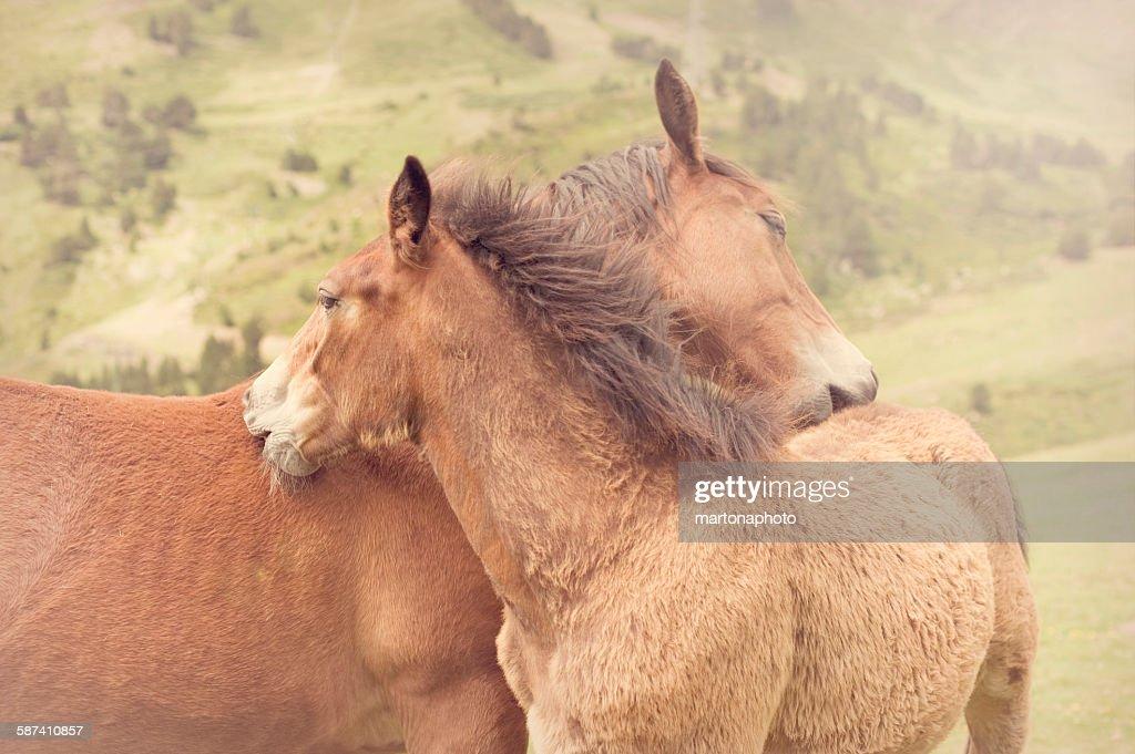 Two horses : Foto de stock