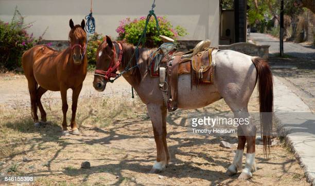 "two horses ready for ""rental"" on a street corner in a small village - timothy hearsum ストックフォトと画像"