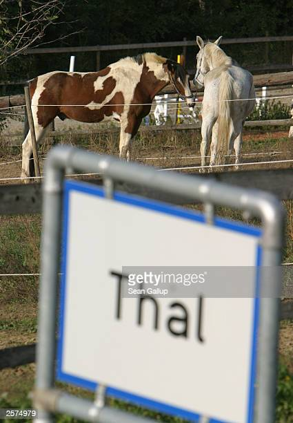 Two horses stand near a sign October 9 2003 on the city limits of the village of Thal Austria where newlyelected California Governor Arnold...