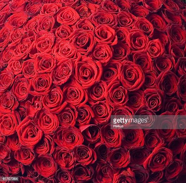 two hundred and one roses second