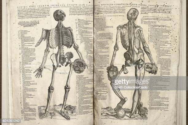 Two images of the human body the left page presents the frontal view of the skeletal system and the right page shows the back view of the muscular...