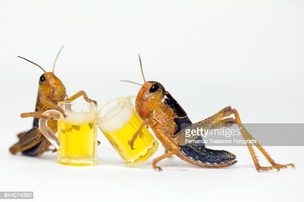 two insects toasting with cold beer - beach cricket stock pictures, royalty-free photos & images