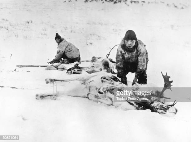 Two Inuit hunters in Canada strip the meat from a pair of reindeer carcasses March 1924
