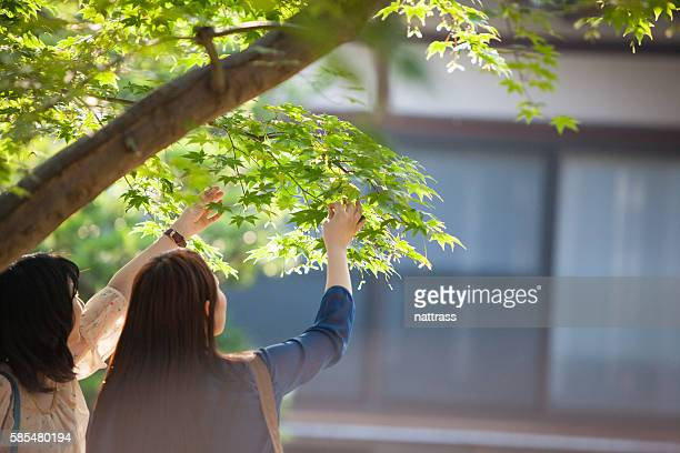 Two Japanese tourists admire the grisp green maple leaves