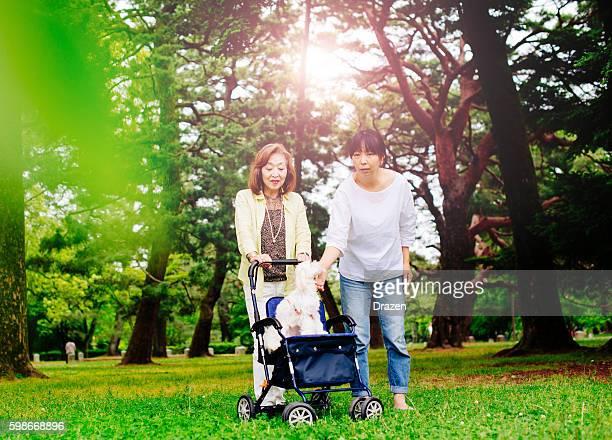 Two Japanese women, senior and mature,walking the Malteser dog