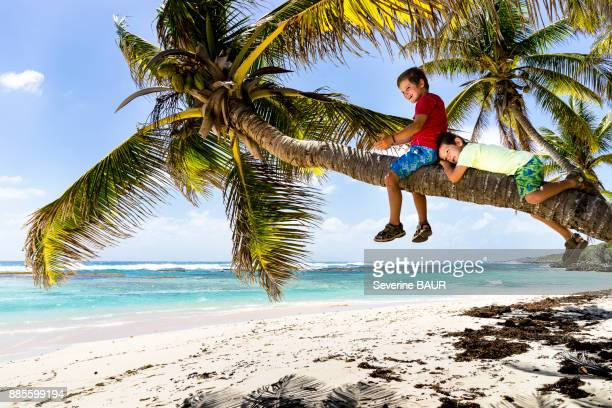 Two kids on a coconut tree, La Feuilleres beach, Capesterre, Marie-Galante, Guadeloupe, France