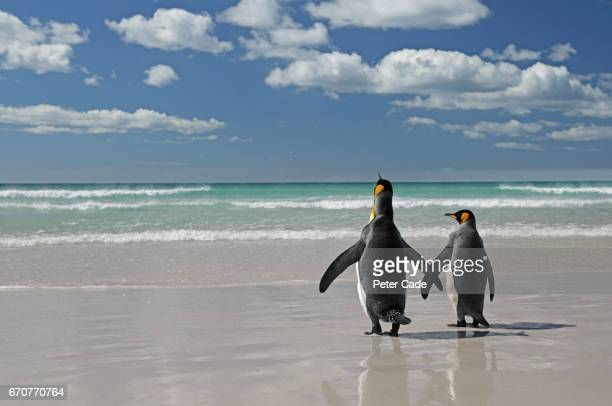 Two king penguins on beach