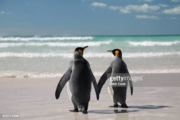 two king penguins on beach - koningspinguïn stockfoto's en -beelden