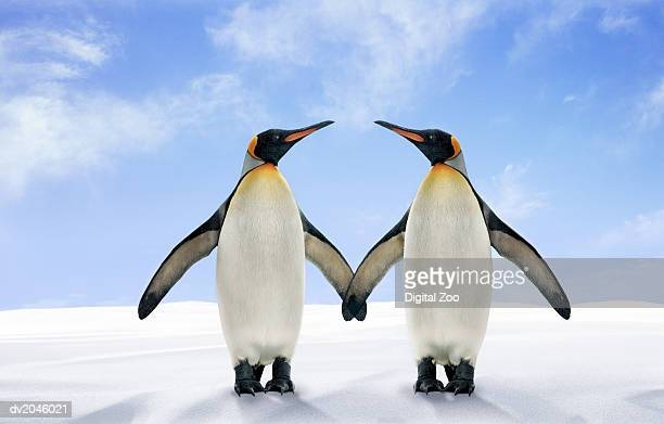 two king penguins stand side by side with their wings touching - koningspinguïn stockfoto's en -beelden