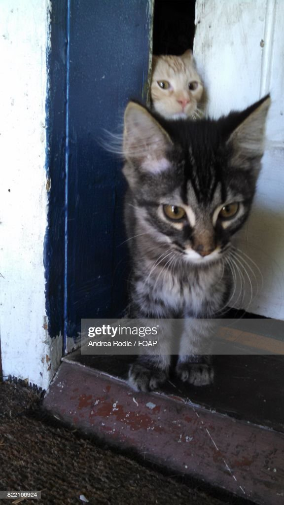 Two kittens escaping from open door : Stock Photo