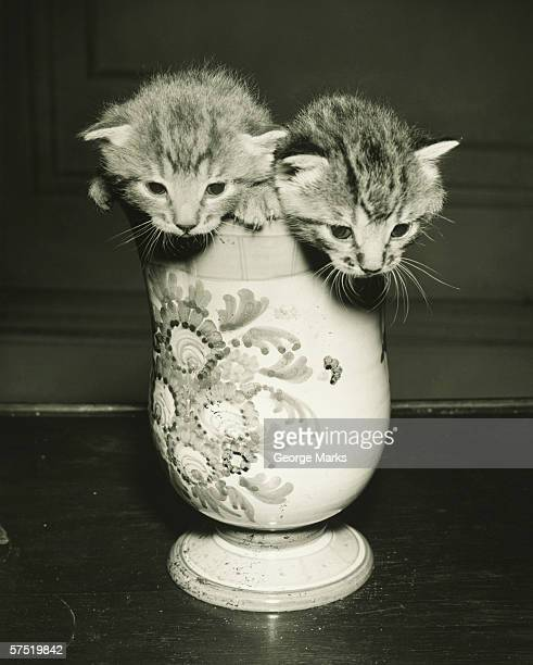 Cat Vase Stock Photos And Pictures Getty Images