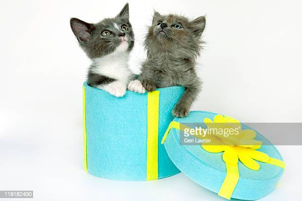 Two kittens in gift box looking up