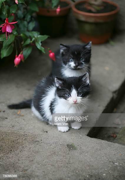 two kittens on patio - domestic animals stock photos and pictures