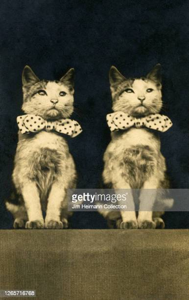 Two kittens pose side-by-side with matching polkadot bow ties, circa 1910.