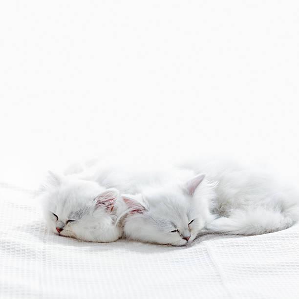 Two Kittens Sleep. Wall Art