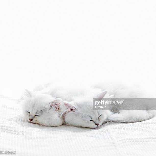 Two kittens sleep.