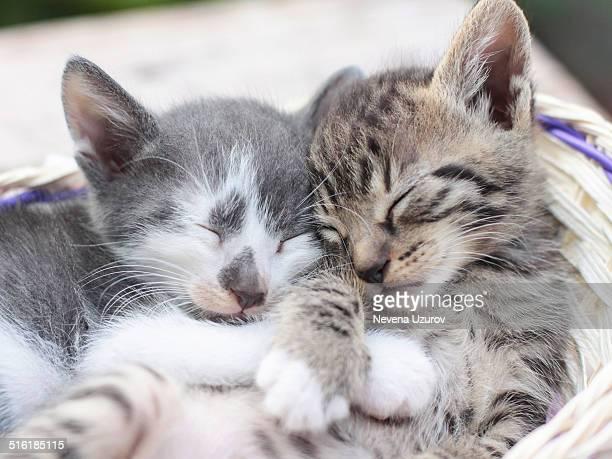 Two kittens sleeping in basket