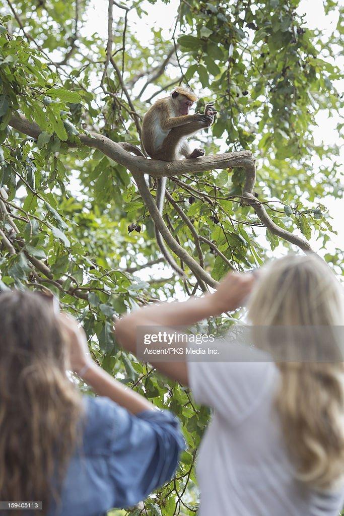 Two ladies watch monkey groom himself in tree : Stock Photo