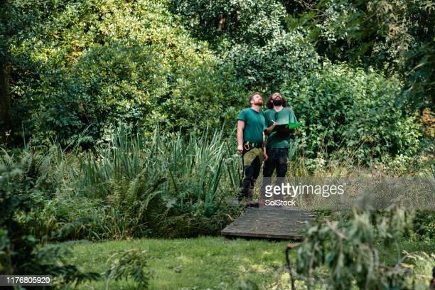 緑豊かな不動産を見上げる2つの風景園芸家 - 造園師 ストックフォトと画像