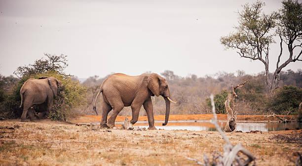 Two Large Elephants Approaching A Watering Hole In African Landsacpe Wall Art