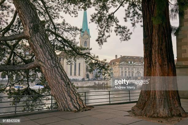 Two large tree trunks on Limmat river embankment, Zurich, Switzerland